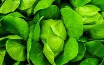 生鲜蔬菜背景图片壁纸2