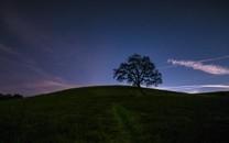 一棵树背景图片高清壁纸