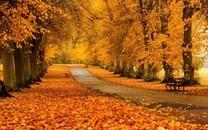 树林小路高清图片壁纸