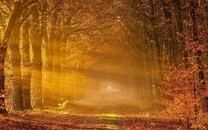 树林小路高清图片壁纸2