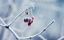 冬天里的植物图片壁纸