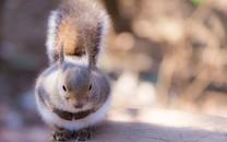 可爱松鼠惬意生活图片壁纸