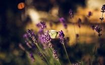 蝴蝶唯美意境背景图片壁纸2