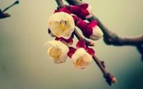 春暖花开唯美景色壁纸