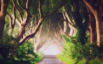 森林图片-森林壁纸图片大全