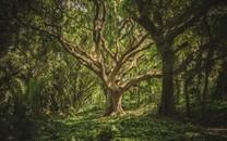 感受美丽的树林风景高清图片壁纸