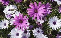 小清新紫色小花摄影图片高清壁纸