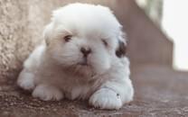 狗头表情背景图片壁纸