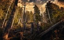 高清秋天的深林桌面壁纸
