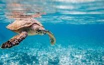 海底世界动物桌面壁纸