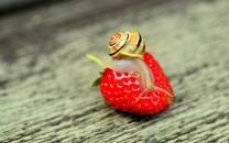 清新草莓高清图片桌面壁纸