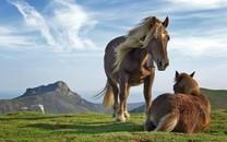 动物与自然和谐的图片壁纸2