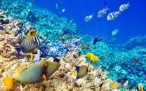 海底世界动物桌面壁纸2