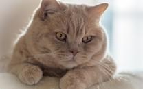户外小野猫图片桌面壁纸
