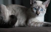 可爱猫咪高清图片壁纸