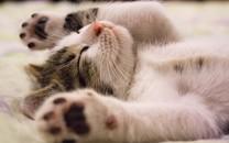 可爱超萌小奶猫图片壁纸2