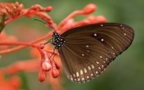 清新自然蝴蝶高清图片壁纸