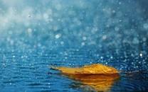 雨中美景图片壁纸