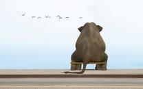 大象图片高清电脑壁纸