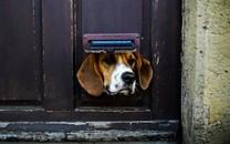 有特色的酷狗图片壁纸