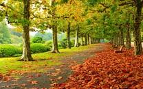 林荫大道自然景色壁纸
