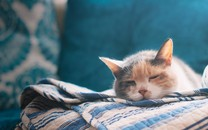 高清小萌猫桌面壁纸