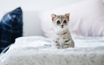 可爱超萌小奶猫图片壁纸