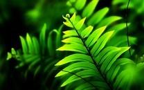 大自然里的清新绿色植物图片壁纸