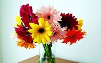 唯美花卉宽屏壁纸