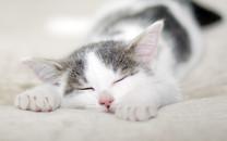 可爱的小猫壁纸桌面