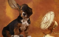 巴吉度名犬壁纸桌面