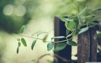 简约植物美景电脑壁纸