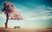 大自然中最美的一棵树图片壁纸2