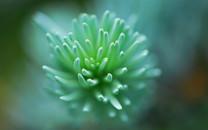植物唯美特写待机壁纸