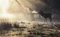 麋鹿图片-高清麋鹿图片大全
