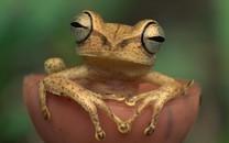 青蛙�D片-青蛙�D片壁�大全