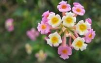 繁花似�\的唯美花朵�D片壁�