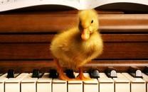 可爱小鸭子图片壁纸