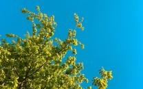 好看的大树高清植物壁纸