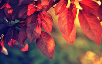 叶子自然高清壁纸桌面