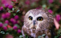 融入自然中的猫头鹰图片壁纸