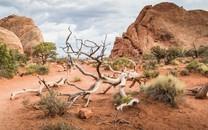 荒芜的沙漠高清壁纸