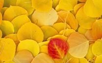 秋天五颜六色的叶子图片壁纸