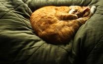 高清萌猫宽屏壁纸桌面