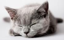 宽屏大图萌猫壁纸桌面