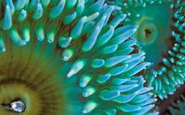 海底世界桌面壁纸