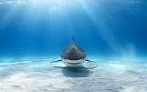 霸气的深海大鲨鱼图片壁纸