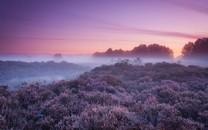 紫色风景壁纸桌面图集
