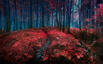 唯美红叶自然桌面壁纸
