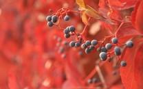 果子植物高清图片壁纸